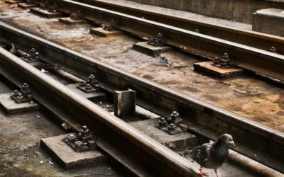 Lançados concursos para modernização da ligação ferroviária Sines e Linha do Sul, num investimento de quase 40 ME
